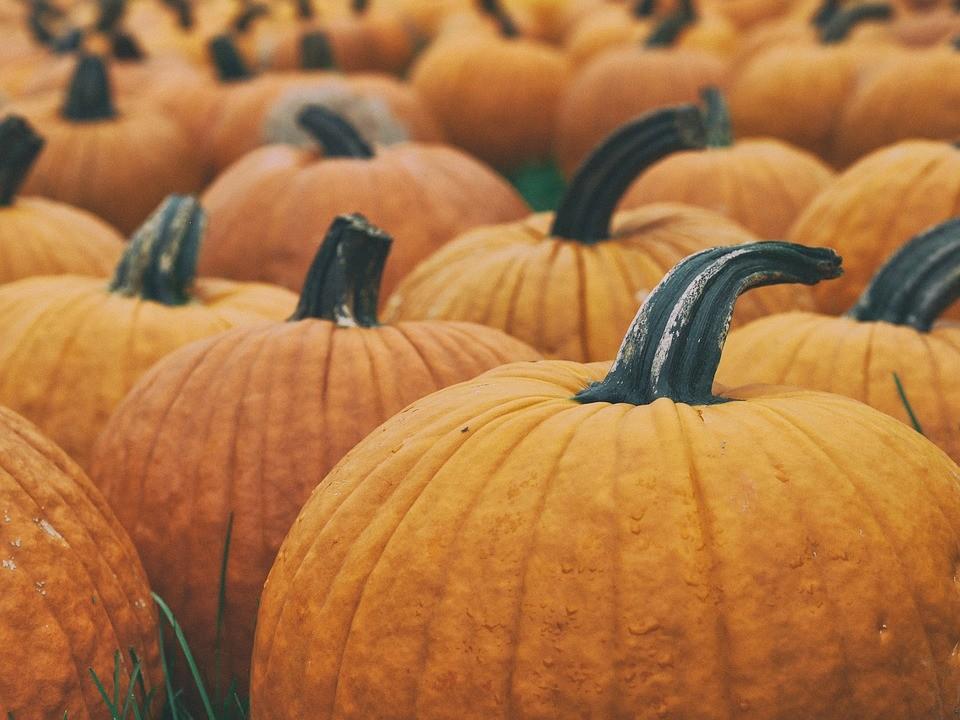 Settembre, mangiare sano: l'arrivo dell'autunno con zucca, cicoria e porri