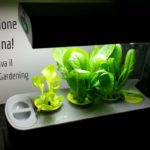 Rivoluzione in Cucina: arriva il Kitchen Gardening